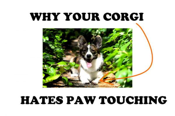 Corgi paws.